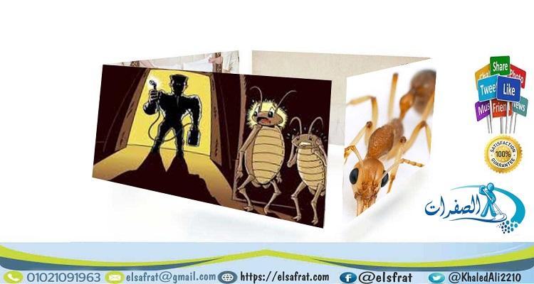 شركة الصفرات لمكافحة النمل